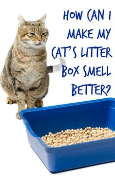 how to make couch smell better 1000 ideas about litter box smell on pinterest litter