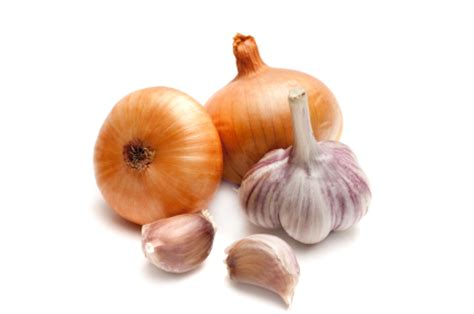 are onions toxic to dogs poisonous foods for dogs chocolate onions gum petcarerx