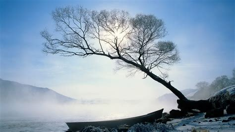 Winter Tree by Winter Trees Winter Wallpaper 22173886 Fanpop