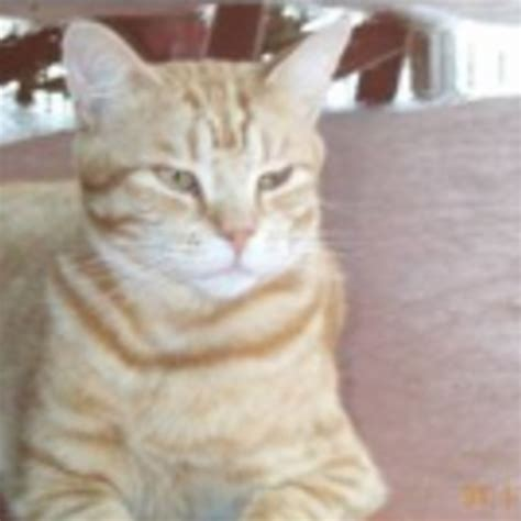 We Are The Cat Excerpt by Excerpts From A Cat And S Diary From Breaking Cat News And