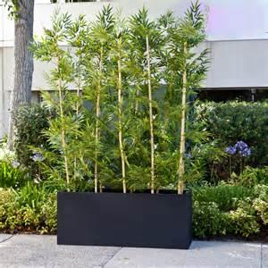bamboo grove privacy screen in modern fiberglass planter