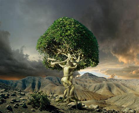 images of love tree tree of love by hanspeterkolb on deviantart