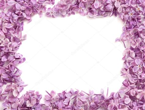 photo cornici cornice fiori lilla foto stock 169 idal 43966387