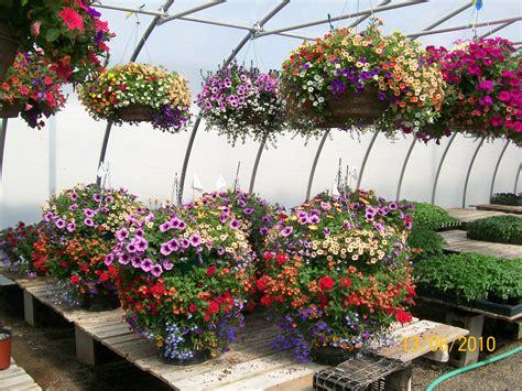 Hanging Flower Garden Hanging Baskets Bossygardenerbabbles
