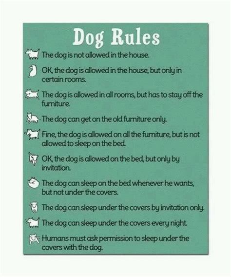 dog house rules dog rules for the pets pinterest