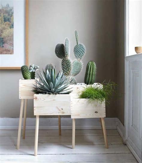 Diy Home Design Ideen by Die Besten 17 Ideen Zu Kaktus Auf Gr 252 Npflanzen
