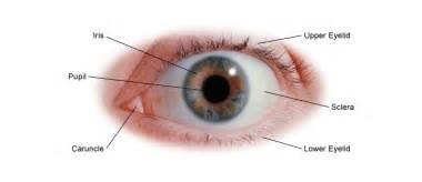 what part of the eye has color eye health general information center for s