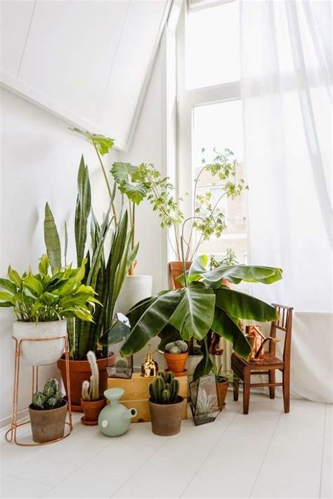 Plants For Decorating Home by 7 Different Way To Indoor Plants Decoration Ideas In Living Room