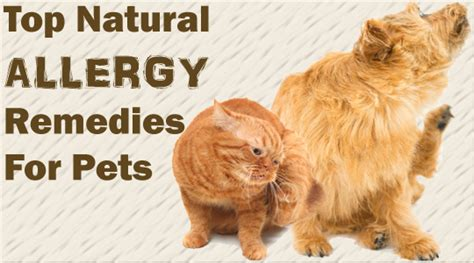 allergy relief for dogs top remedies for and cat allergies all pet care