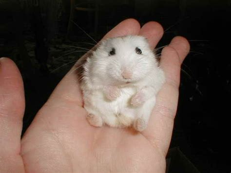 Small Animals Type C 17 best images about animals on animals and hamsters