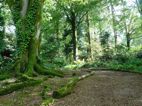 Woodland Gardens by West Images Threave Gardens