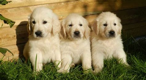 great puppy names 150 names great names for puppies the happy puppy site