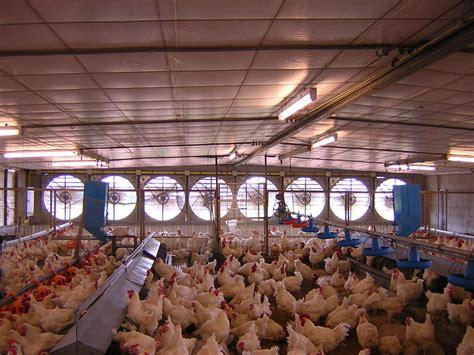 Kipas Untuk Kandang Ayam rincian pembuatan kandang closed house dokter
