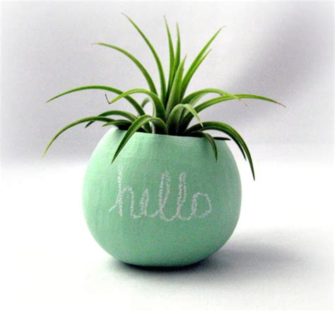 mini plants mini flower pots neon color ideas home design and interior