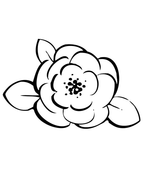 rose line art coloring page h m coloring pages