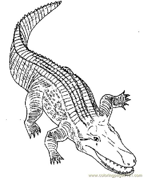alligator coloring page pdf colallig coloring page free alligator coloring pages