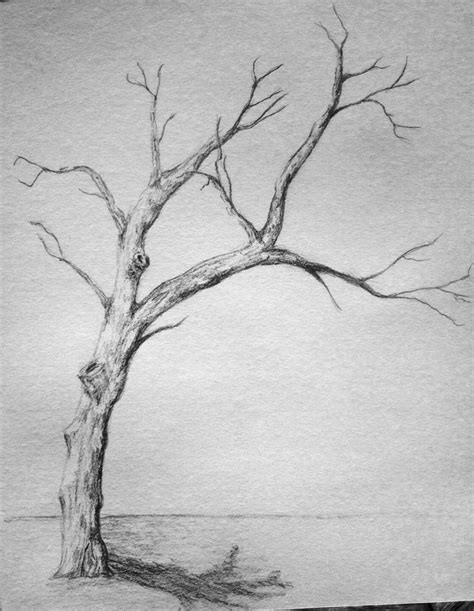 A Sketches Of Trees by Withered Tree Sketch By Wanderingentity On Deviantart