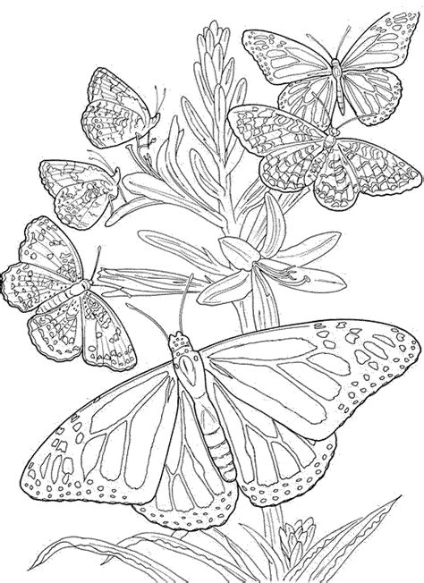 detailed coloring pages for adults flowers detailed coloring pages for adults printable butterfly and