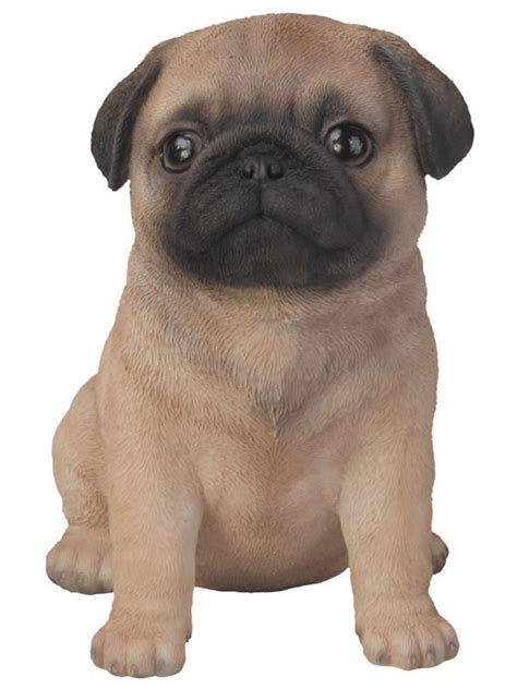 realistic pug puppy statue natures gallery  products