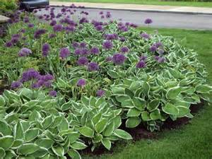 hosta border landscaping