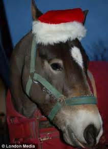 Goat and a horse also get in on the action and wear christmas costumes