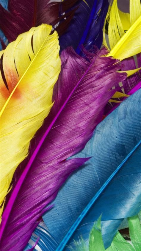 colorful feather colorful feathers wallpaper free iphone wallpapers