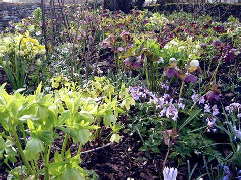 woodland garden ideas how to design and plant a woodland garden saga