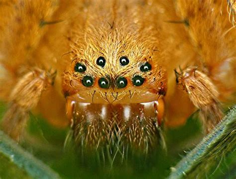imagenes horrorosas reales los ocho ojos de la ara 241 a ar 225 cnidos
