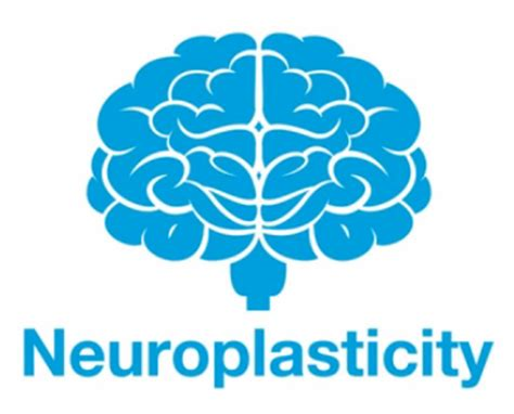 neuroplasticity brain meets new tricks books the neuroplasticity of relationships speaker author