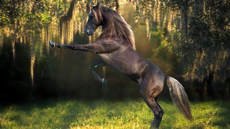 wallpaper horse free download horse desktop wallpaper desktop backgrounds for free hd