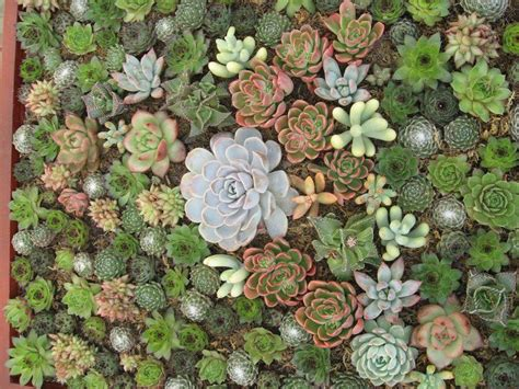 Succulent Vertical Garden Vertical Garden Succulents Mulch For Gardening