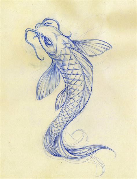 Drawing Koi Fish by Koi Fish Sketch By Daeo On Deviantart