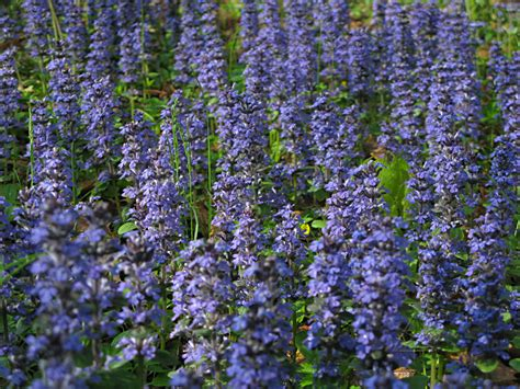 some beautiful color low growing flowers that you must add to the garden homesfeed