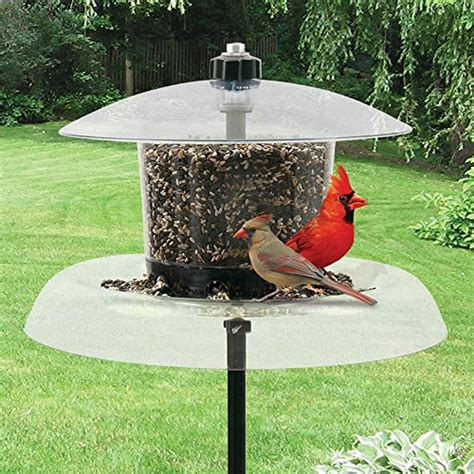 droll yankees jg m 6 lb jagunda squirrel proof bird feeder