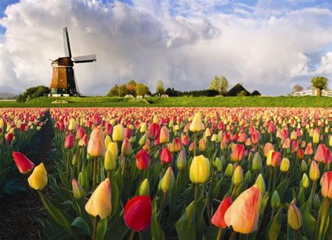 Bor Angin highlights tulip bike tour netherlands tripsite