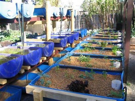backyard crawfish farming systems backyard aquaponics aquaponics gardening