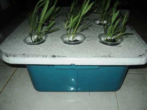 Hidroponik Murah Dan Praktis cara membuat tanaman hidroponik di rumah sederhana