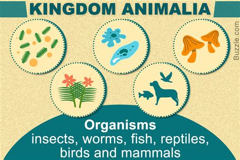 The Kingdom an explanation of the 5 significant kingdoms of living things