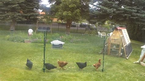 Flies In Backyard Chicken Fence Run Youtube