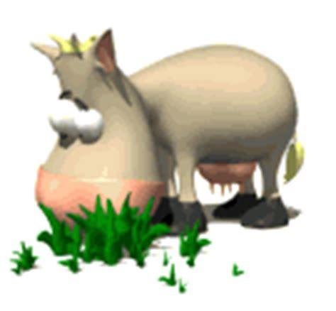 imagenes gif vacas im 225 genes animadas de vacas gifs de animales gt vacas