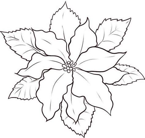 17 best images about poinsettia on pinterest coloring