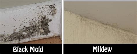best way to get rid of black mold in bathroom best way to get rid of black mold in bathroom 28 images