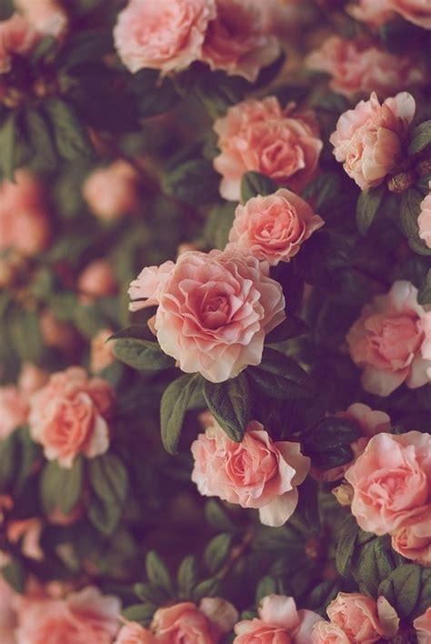 tumblr themes roses vintage roses tumblr wallpaper 7 jpg hd wallpapers hd