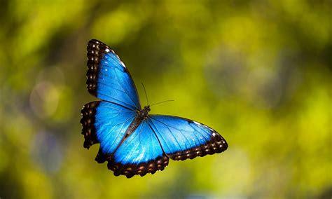 imagenes jpg mariposas 19 fotos antes y despu 233 s de la transformaci 243 n de orugas