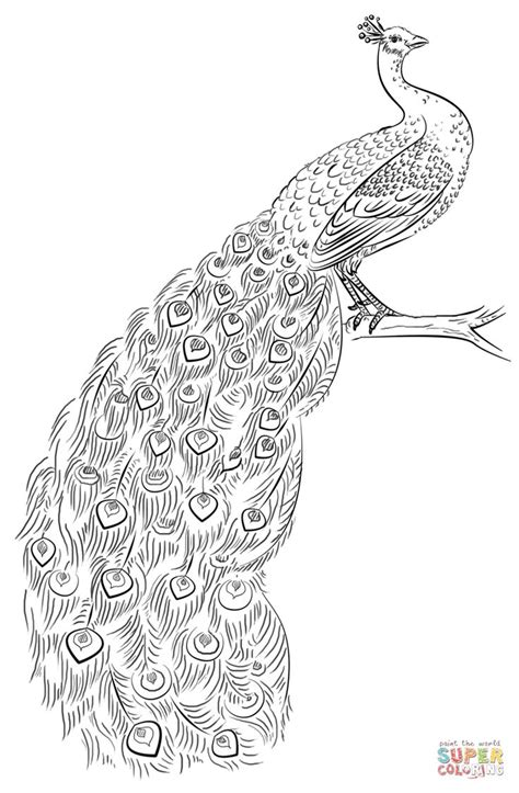 animal coloring pages peacock peacock coloring page free printable coloring pages