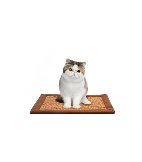 Scratching Mats For Cats by Cat Scratching Mat Moomoopets Sg Singapore S Pet