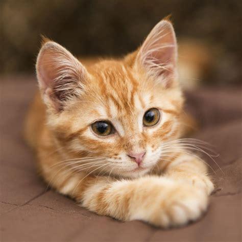 un gato a cat 842635095x les aliments pr 233 f 233 r 233 s des chats