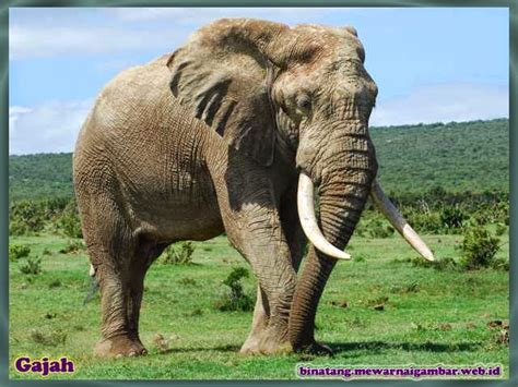 film kartun gajah dan monyet daftar nama binatang herbivora nama gambar binatang a z