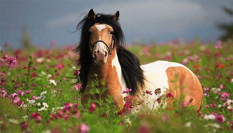 imagenes de paisajes y animales hermosos ranking de los mejores paisajes de animales hermosos