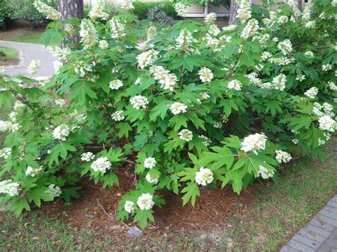Outdoor Flowering Plants Outdoor Flowering Plants Outdoor Flowering All Seasons
